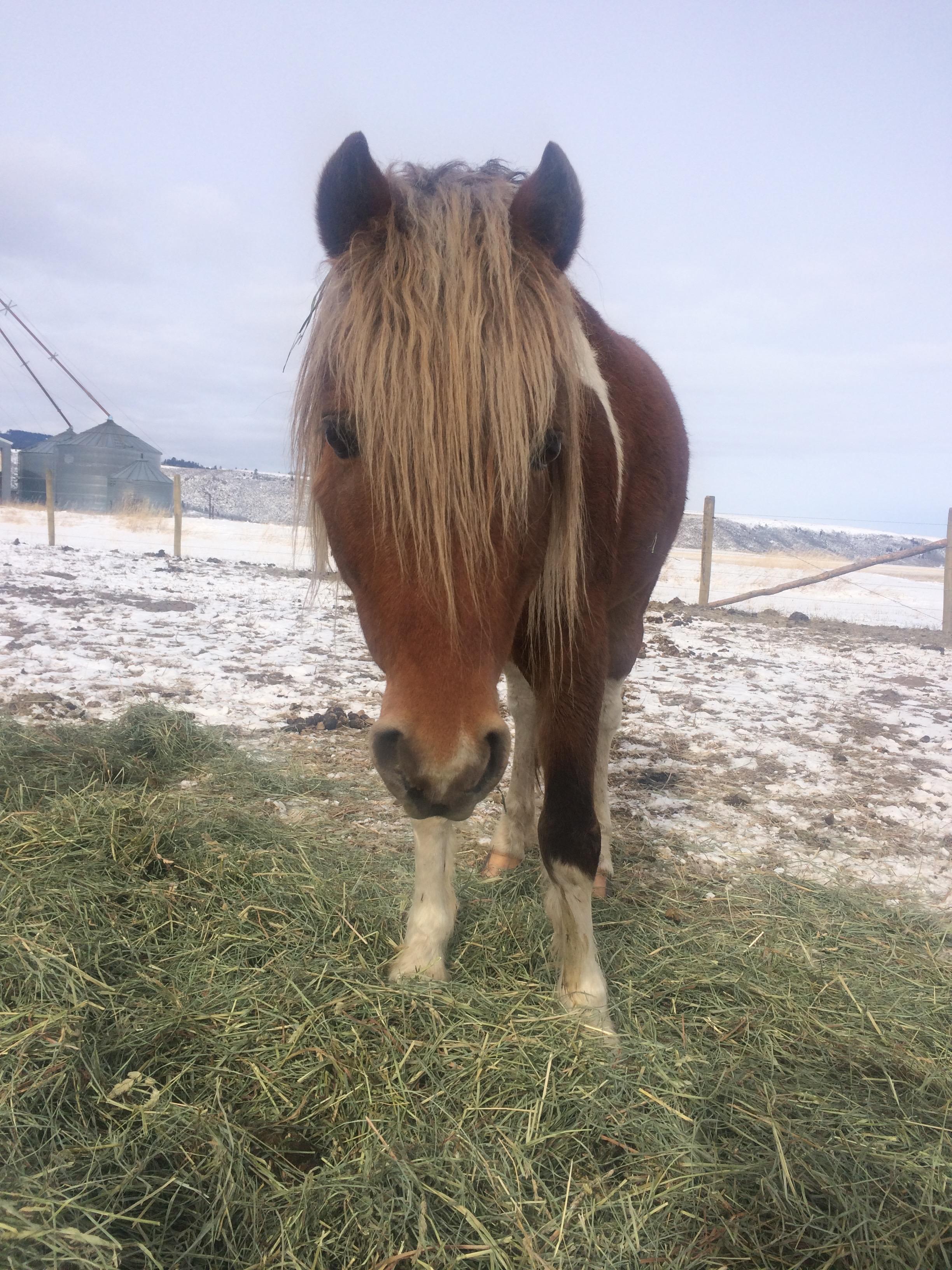 sooner the mega stallion:)