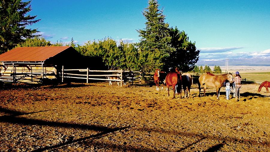 Horse Programs